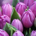Kevään uutiskirje